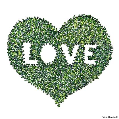 Green heart illustration