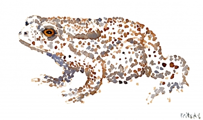 Common Toad watercolour