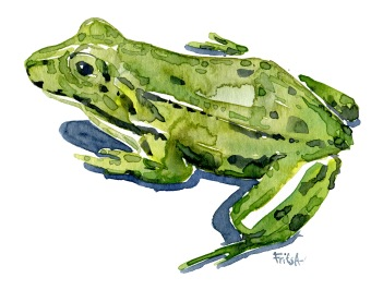 edible-frog-3-watercolor-illustration-by-frits-ahlefeldt