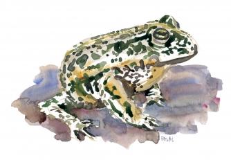 Walking toad