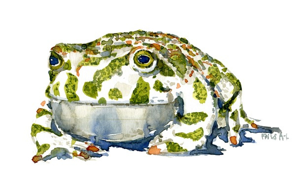 Green-toad-front-illustration-by-frits-ahlefeldt