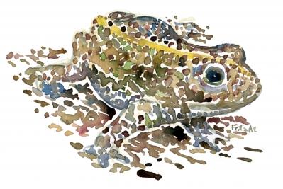 Natterjack watercolor