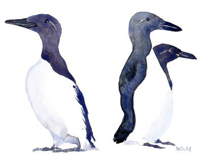 illustration of a guillimot bird