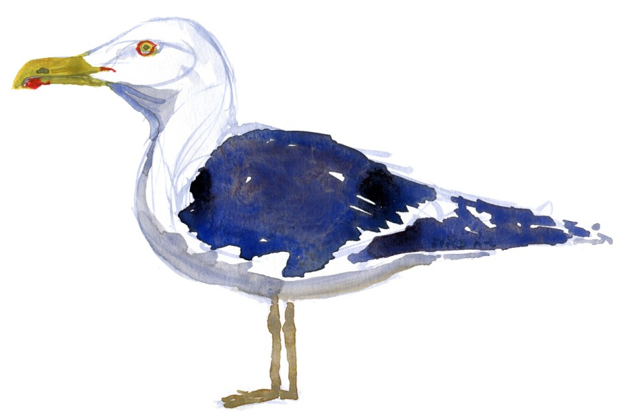 Sea gull watercolour