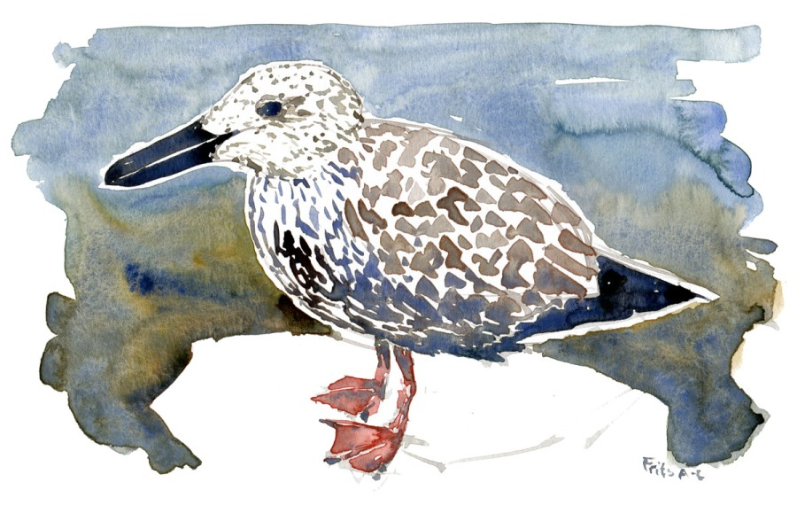 Watercolor of young seagull
