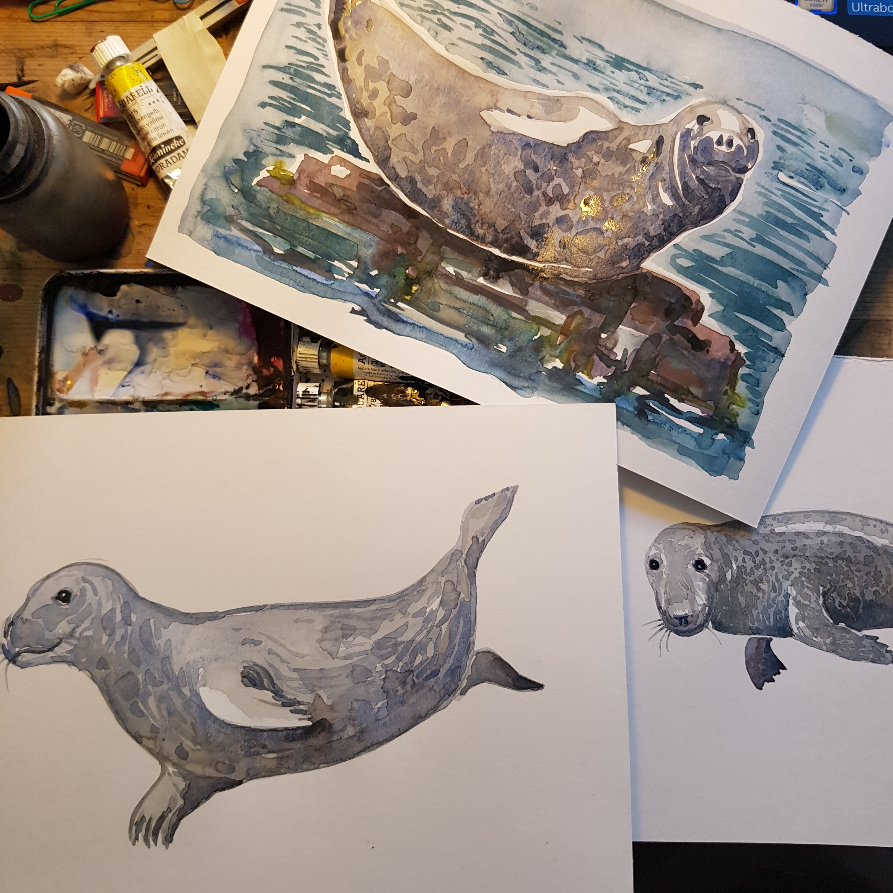seal watercolor sketching