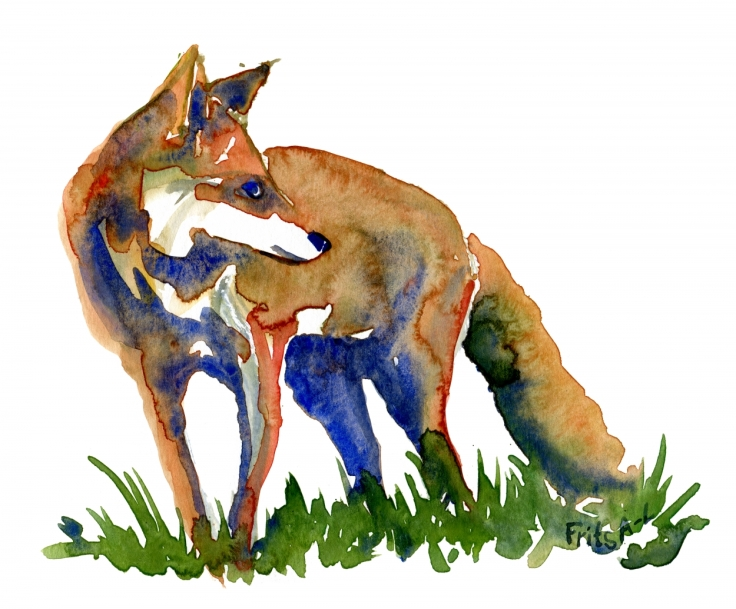 Watercolor of Fox