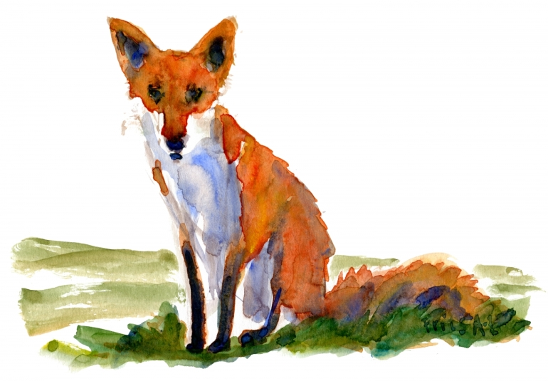Fox drawing