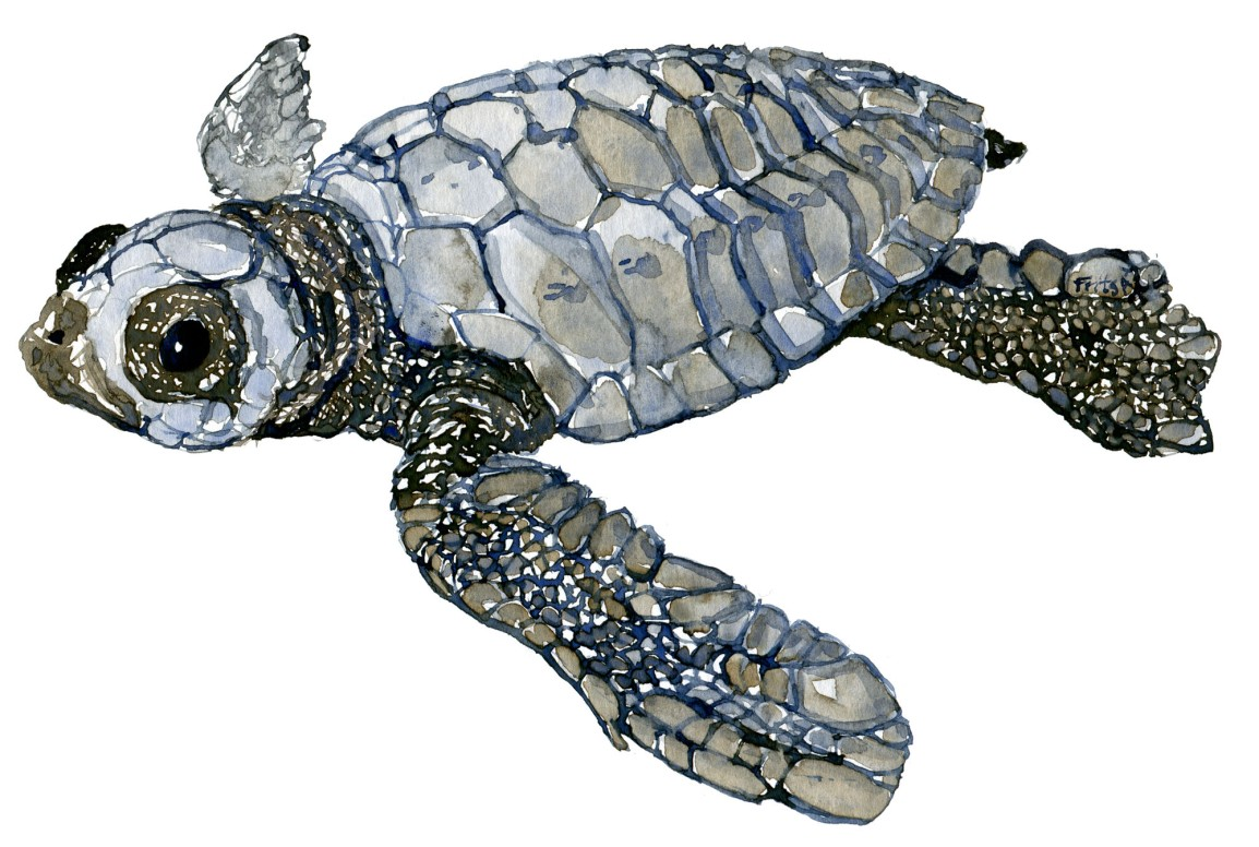 A day with Leatherback sea turtlewatercolors