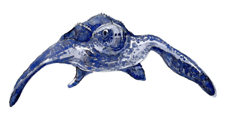 Front view Leatherback turtle in Watercolor