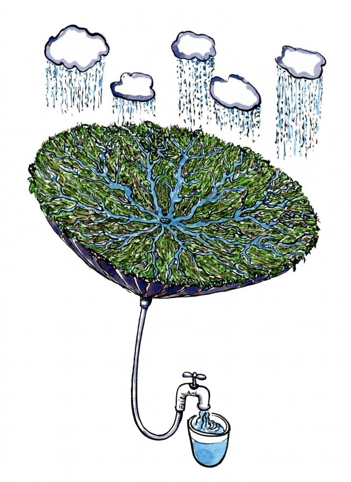 Inversed umbrella with green plants, working as a water purification system