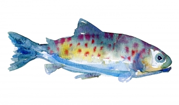 Watercolor by Frits Ahlefeldt, of trout