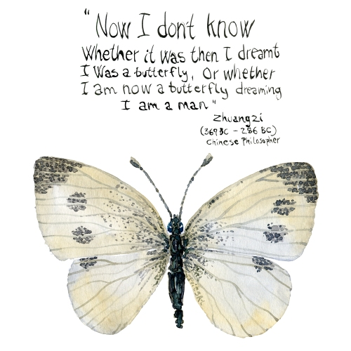 watercolor of butterfly and quote by Zhuangzi, chinese philosopher, china