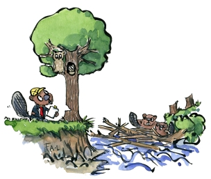 Drawing of a beaver wanting to put down a tree with an owl family in it.