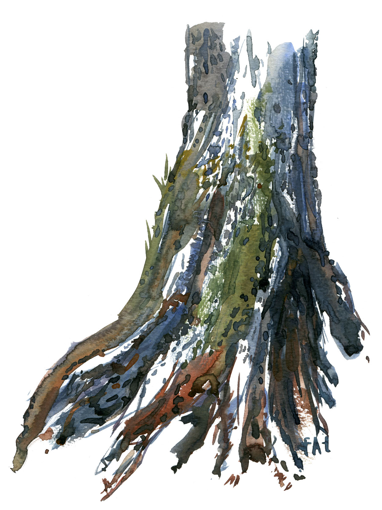 Watercolor of tree lower part. Art by Frits Ahlefeldt
