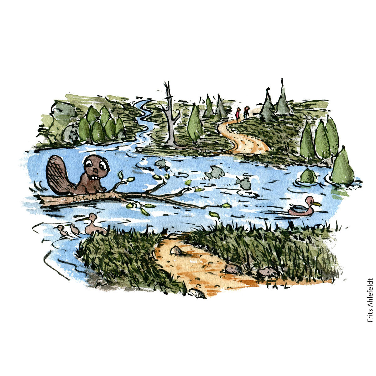 Drawing of a beaver sitting by a flooded trail. Traildesign hiking Illustration by Frits Ahlefeldt