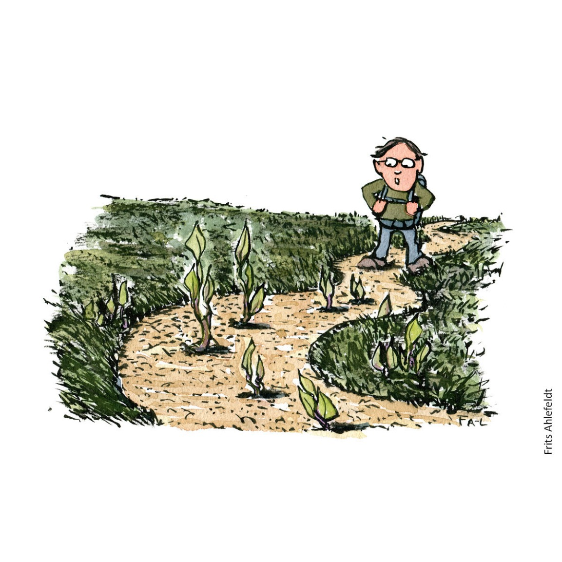 Hiker looking at trail damage by invasive species along trail ( japanese knotweed) Hiking Illustration by Frits Ahlefeldt