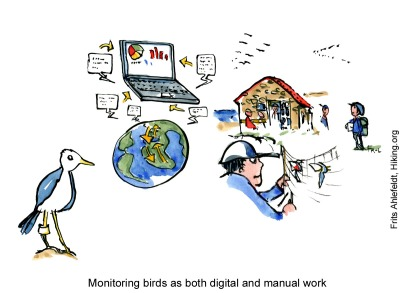 Drawing of people working with wild birds, ringing and monitoring them. drawing by Frits Ahlefeldt