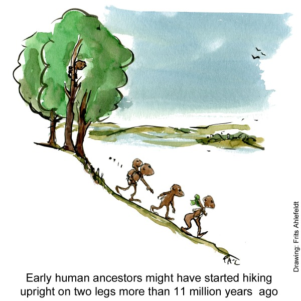 Drawing of a group of apes ( Danuvius guggenmosi) walking out of a forest on two legs. Illustration by Frits Ahlefeldt